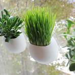 Window Pods Indoor Garden // Set of 3