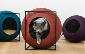 Modern Cat Beds